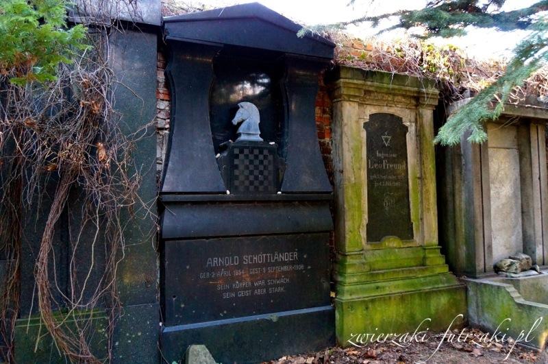 Stary cmentarz żydowski we Wrocławiu