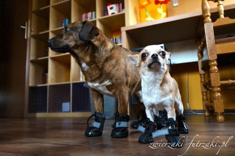 Piksel i Cece w butach