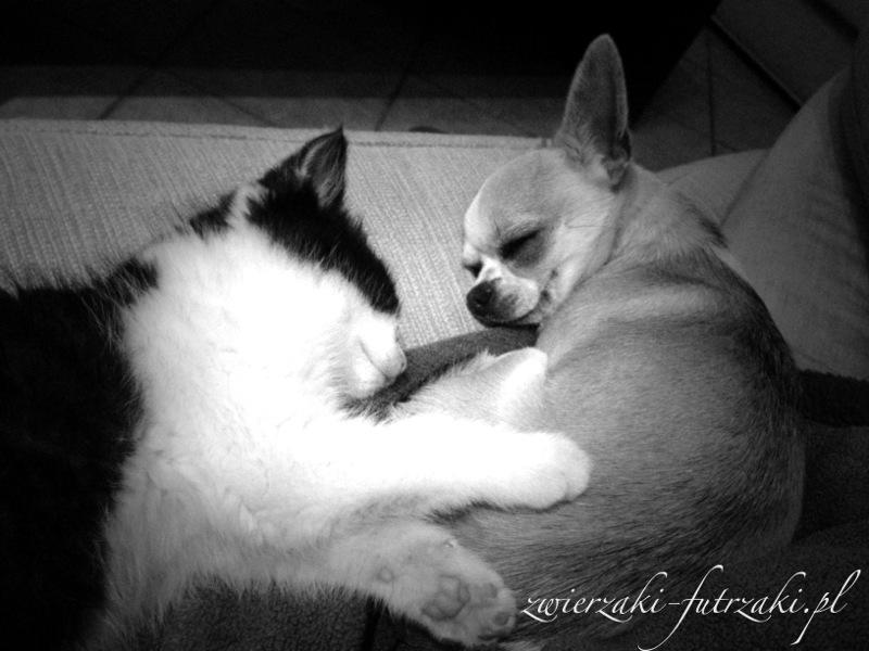 Kitek i Cece